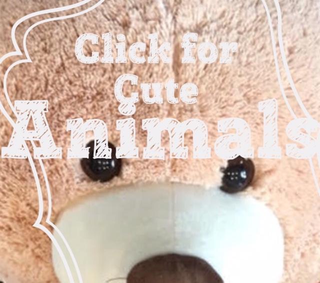 Animals 15 inch